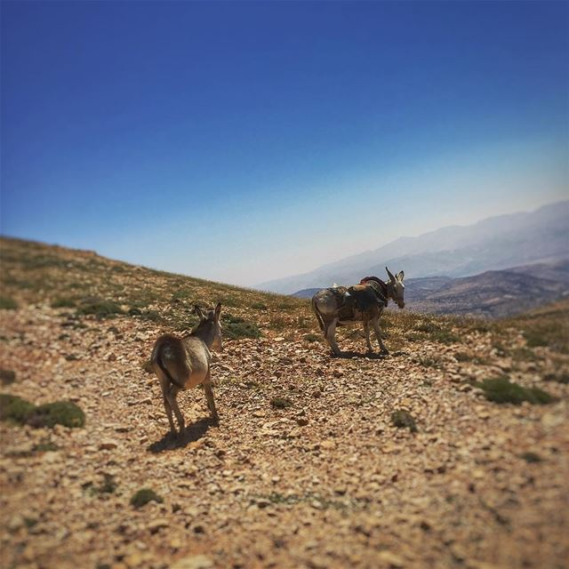 Follow me Eeyore ... FollowMe FollowMeTo Mountain Sky Donkey Nature ... (Qurnat as Sawda')