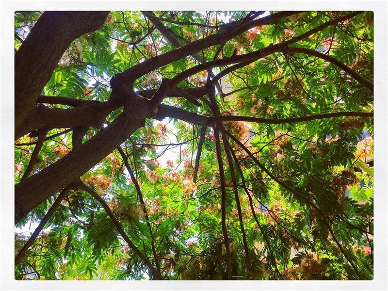 "Positive nature gives positiveenergy... ... (Studio Vision "" MTV"" - Na2ash)"