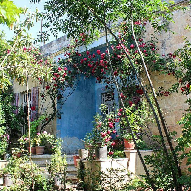 و يا ورد العايق بالطول..💚 🍃🌷🍃💙... lebanon beino beinovillage ... (Beïno, Liban-Nord, Lebanon)