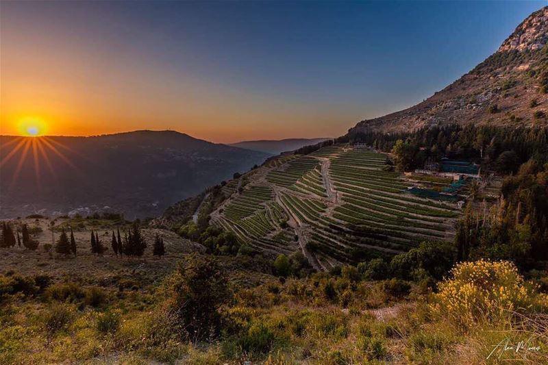 sunset purelife bluesky orangesky trees mountain mountainartist ...