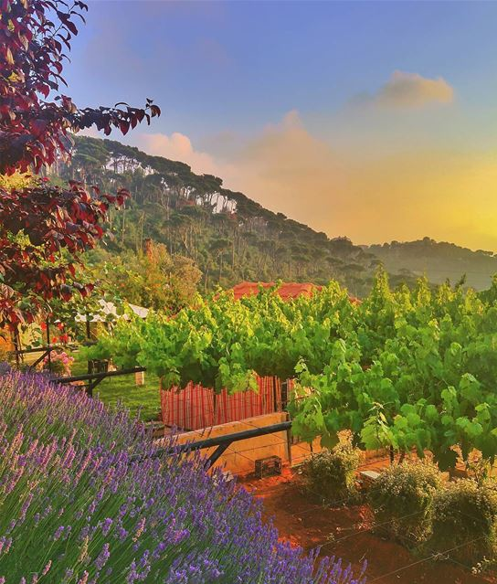 Beautiful combination 😍 lebanon nature naturelovers natureporn ... (Bmariam, Mont-Liban, Lebanon)