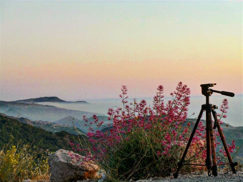 Every viewer is going to get a different thing. That's the thing about... (Al Shouf Cedar Nature Reserve)