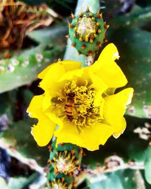 Bee Active 🐝🤸🏽♂️ Bee Healthy 🐝🍯 Bee Fit 🐝🏋🏻Bee SANE 🐝🍃 ...