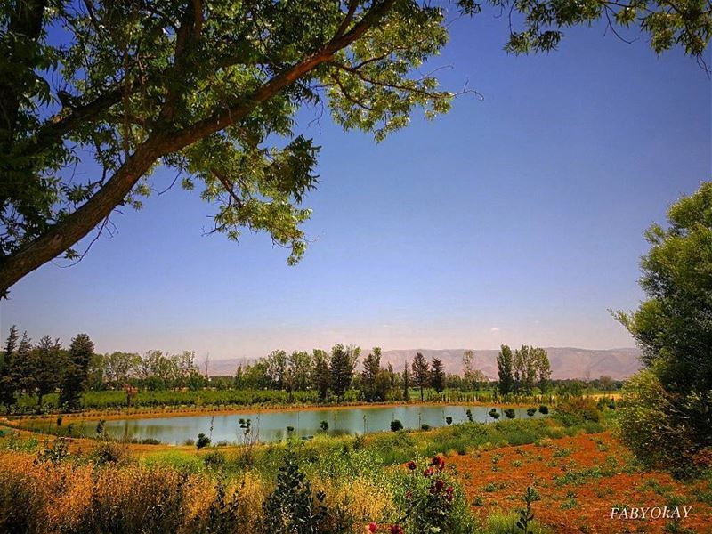 =======================================BEST FROM LEBANON LOCATION :TAANAY (Taanayel Lake)