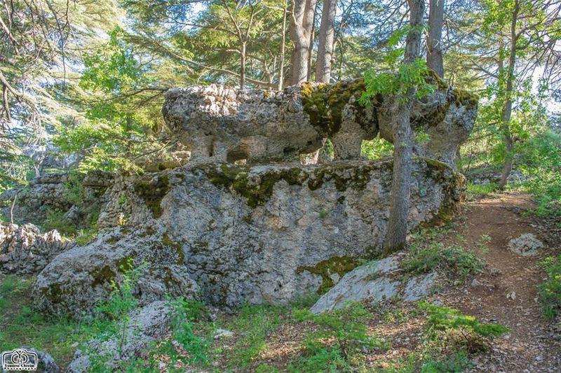 عينا الصخر تحرس عذرية الطبيعة - محمية أرز تنورين nature rocks rock ...