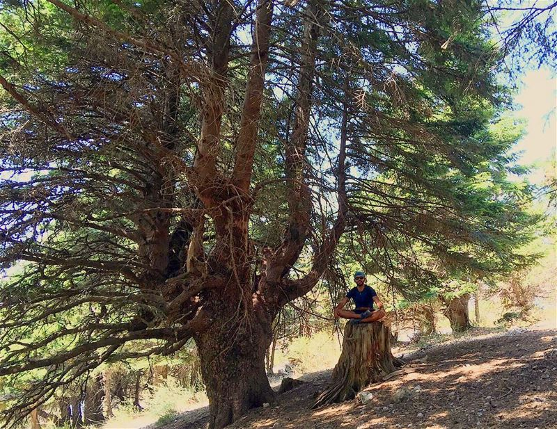 Trees are much like human beings and enjoy other's company . Rare are... (القموعة-عكار العتيقة)