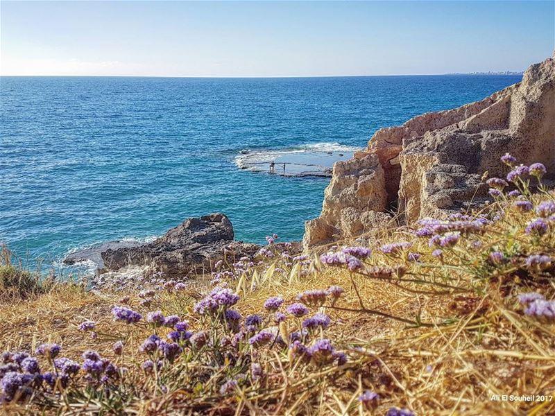 tb beach sea flowers southlebanon naqoura blue sky summer fun ... (En Nâqoûra, Liban-Sud, Lebanon)
