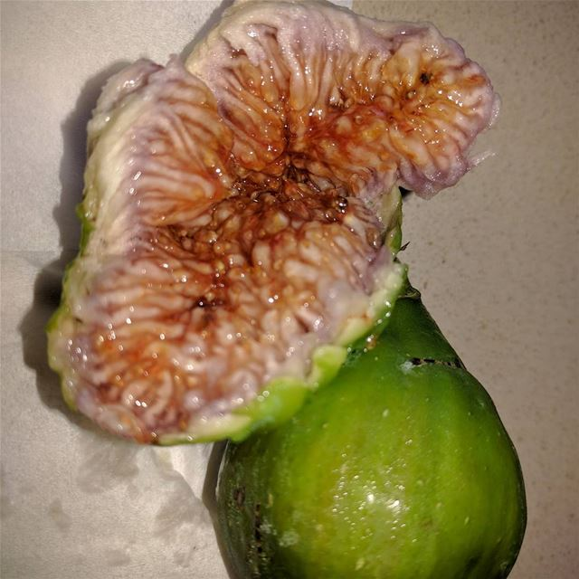 figs figtree fruit fresh garden mygardentoday mygardens ...