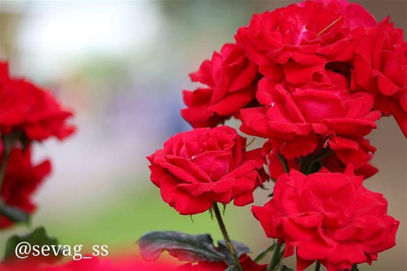 colors beautiful flower colorful macro macro_perfection ...