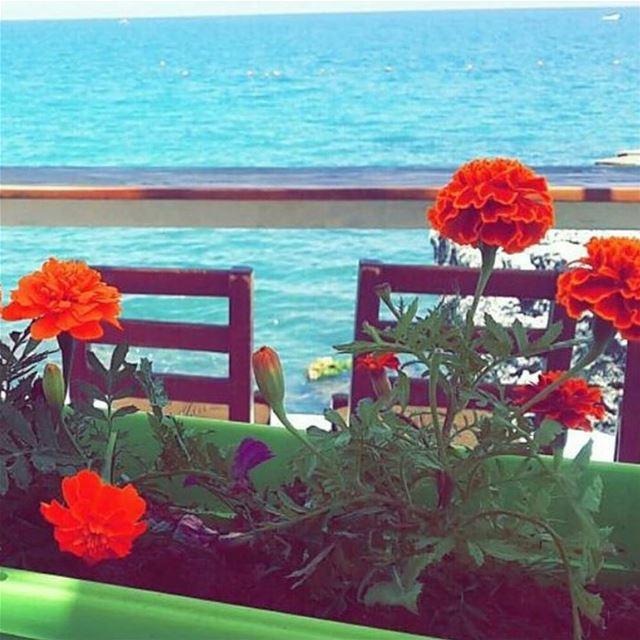 Morning Flowers colors tahetelrih2017 ta7etelri72017 تحت_الريح_٢٠١٧... (Ta7t El Ri7 - Anfeh)