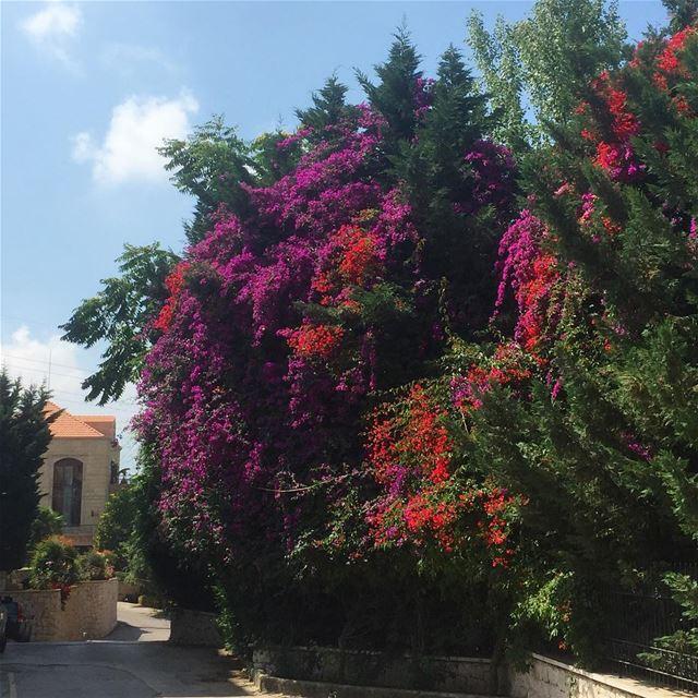 insta_lebanon wanderlust ig_nature ig_capture ig_lebanon ... (Shayle)