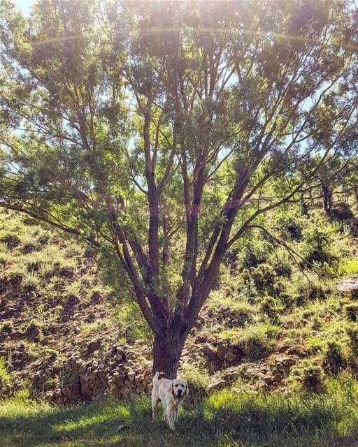 🐶🐾😄 insta_lebanon mycountrylebanon Dog Lebanon sun tree sky ...