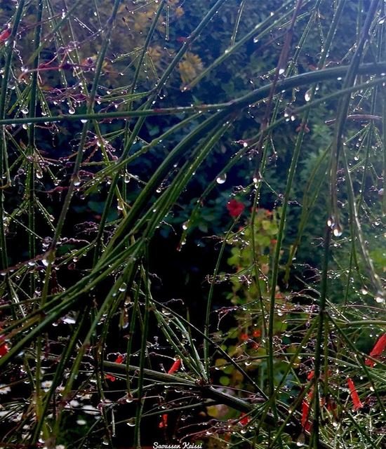 now my garden green red waterdrops ...