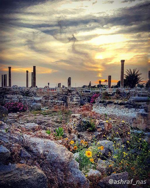 راجع من صوب أغنيةيا زمانا ضاع في الزمن...صوتها يبكي فأحملهبين زهر الصمت... (Roman ruins in Tyre)
