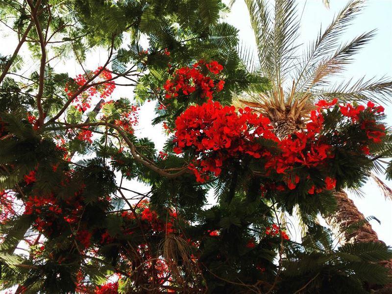 botanic instamood instamoment byblos floral livelovelebanon❤️ ...