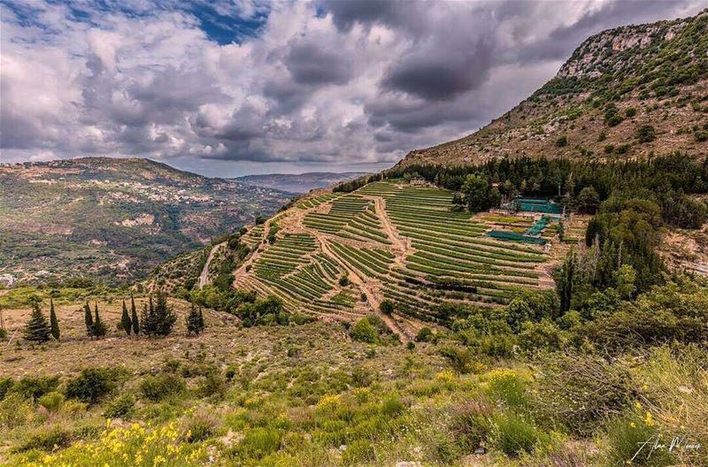 Hello dear followers💚 From Jezzine by @alaamonzer 😍💚😍💚😍💚😍💚 ...