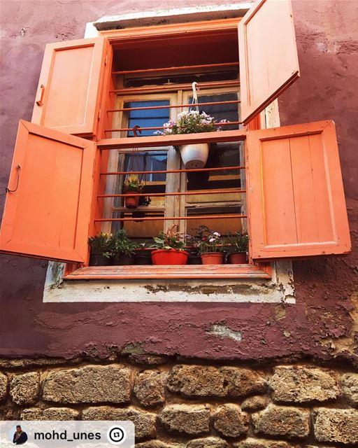 """"""" orangewindow oldstonehouse oldwall tyre oldcity flowerboxes sour ..."""