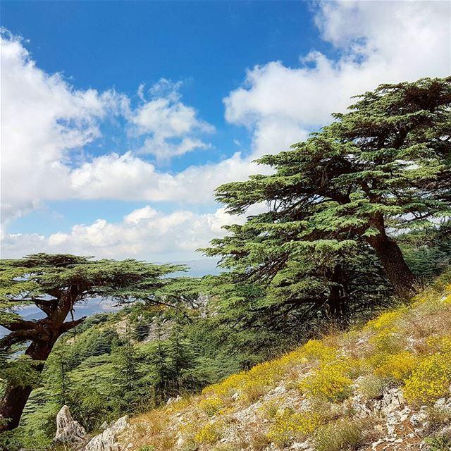 Oxygen 🙌 cedars trees sky clouds flowers mountain hike sports ...