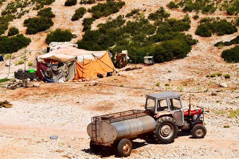 Sometimes I wonder who is happier! ... lebanon bekaa nomad ...