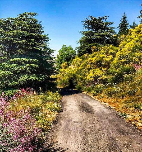 When in Arz el Chouf chouf choufcedarsreserve mountainsoflebanon ... (Al Shouf Cedar Nature Reserve)