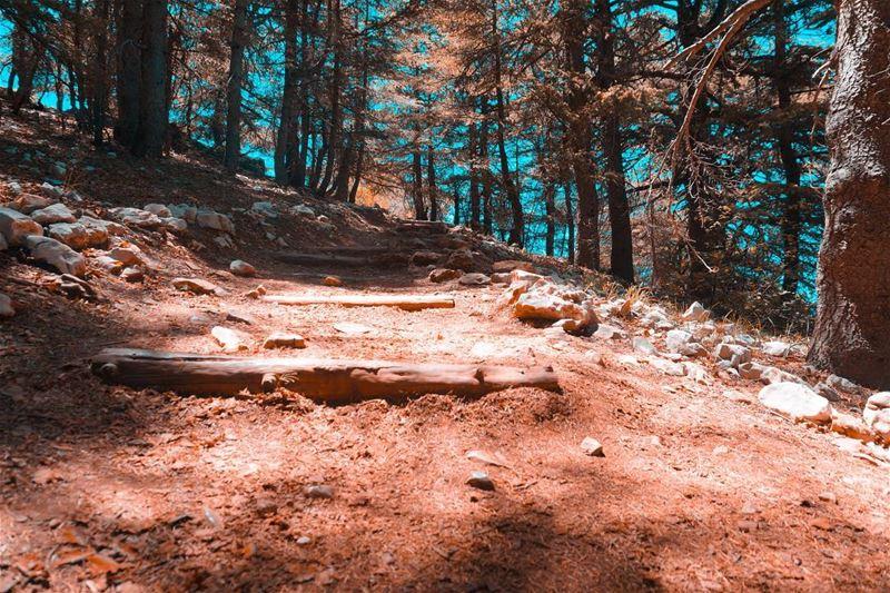Stairway to heaven📍Lebanon - Arz el Barouk (Chouf)📷 Sony... (Arz el Bâroûk)