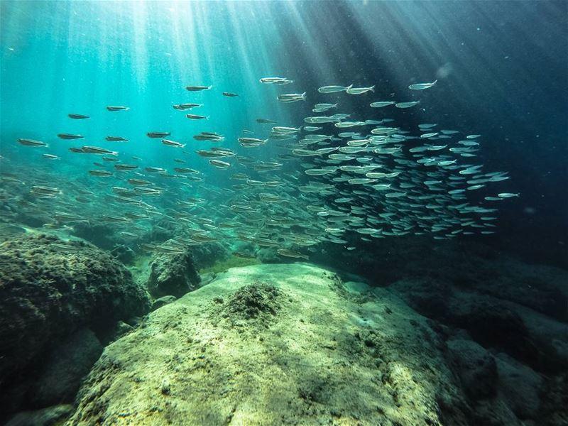 Only dead fish swim with the stream...! (Kfarabida Batroun)