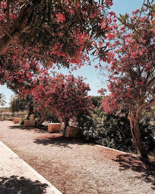 OverRose 🌺 Beirut nature iamatraveler......- [ ] vsco vscocam... (الاثار البحرية صور)