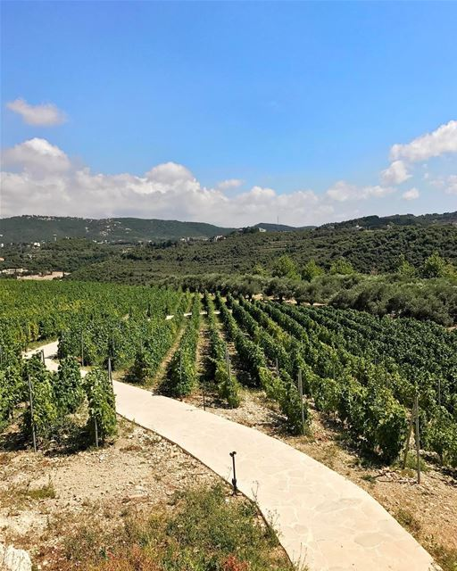 A lot of people don't know that the climate in Lebanon is perfect for... (Ixir Winery)