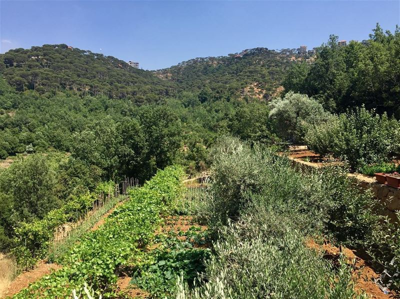 Lebanese village 🌳 lebanon  agriculture  lebanesevillage  plants ... (Dhour choueir)