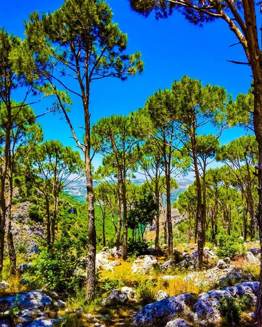 Take me to the trees.... treesofinstagram  treetrunks  naturelovers ... (Dâr Baachtâr, Liban-Nord, Lebanon)