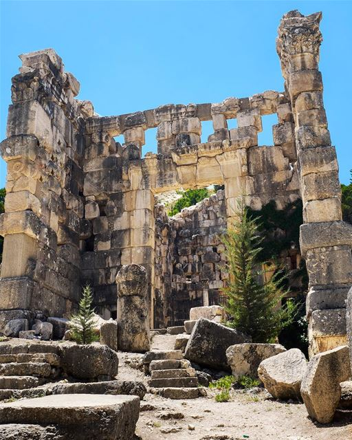 Staff of Life? I've wanted to visit Niha ever since I first heard about... (Niha, Béqaa, Lebanon)