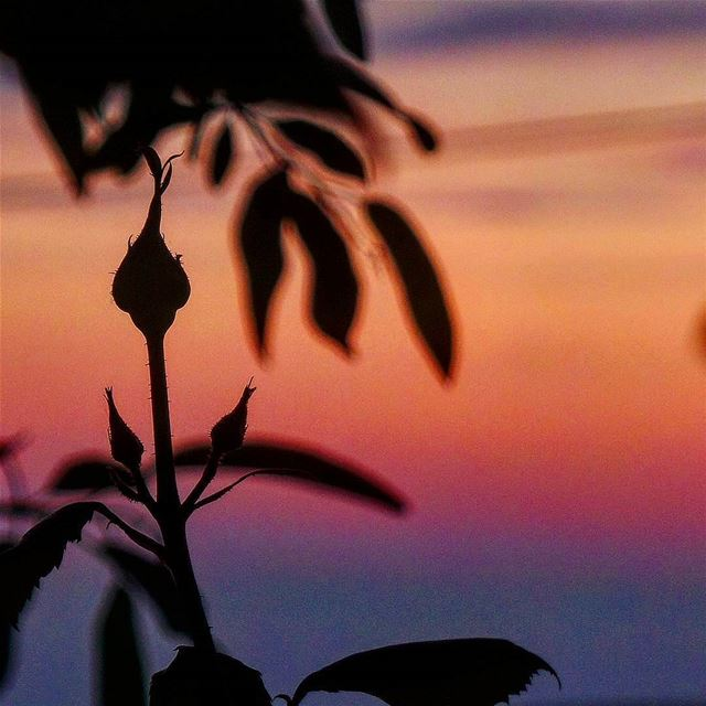 """""""Sunset is the opening music of the night"""" ❤ nikontop_ nikonworld ... (Radio voix du liban 93.3 - اذاعة صوت لبنان)"""