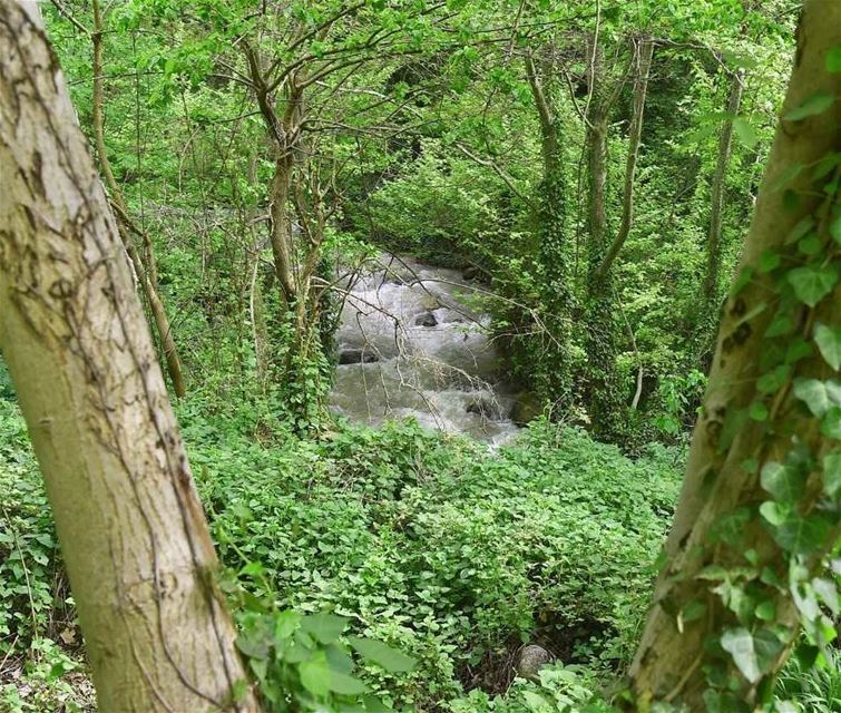 نهر وادي_قنوبين (📸لبنان 24).. lebanon nature sunny beauty ...