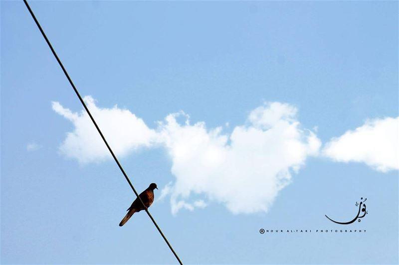 nouraltakiphotography stand ontheedge free mybird love ...