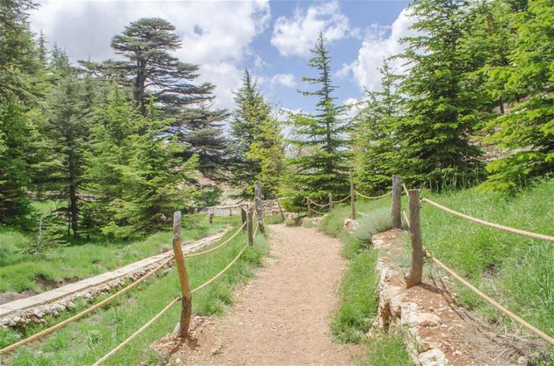 Bonjour 😊😊.............. Lebanon livlovelebanon ... (Cedars of God)