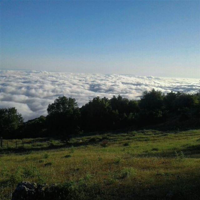 cloud sunset forest akkar lebanon liveloveakkar livelovebeirut sky...