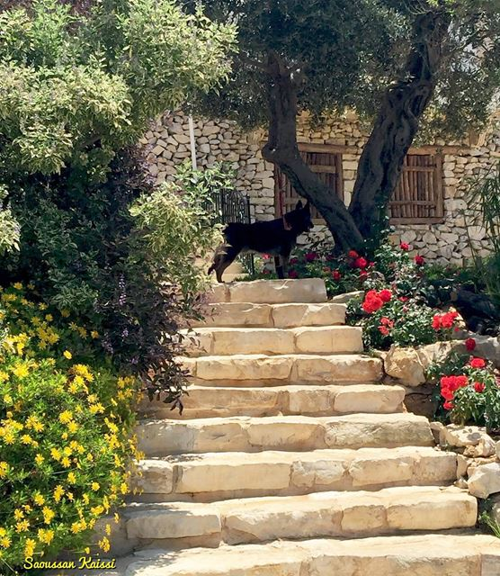 oldhouse old dog stairs flowers beautiful arnaoun ...
