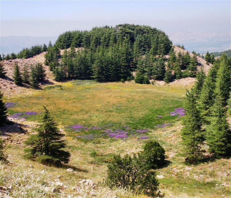 I can see Maria and the children on the meadow 🌲 The Sound Of Music 🎵 (Arz el Bâroûk)
