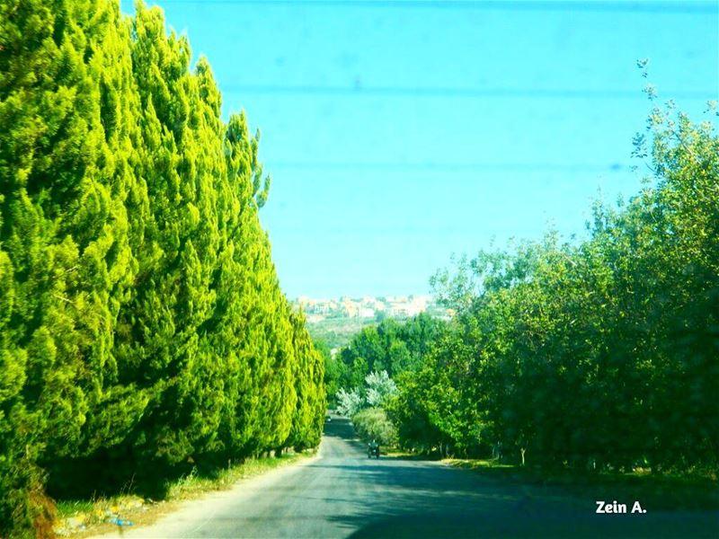 trees green gogreen south road roadtrip travel tourism landscape ... (Ansar, Lebanon)