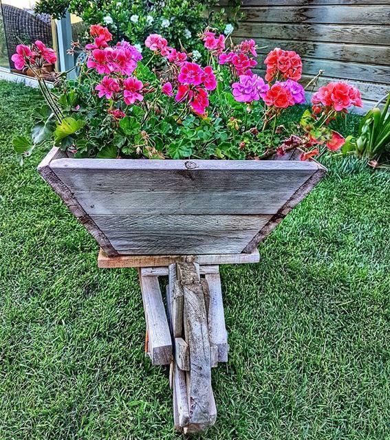When wheelbarrows look nice flower garden home wheelbarrow weekend ... (Brummana)