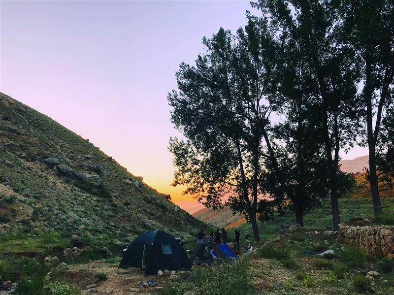 🏕 Saucisse camping ... (Cedars of God)