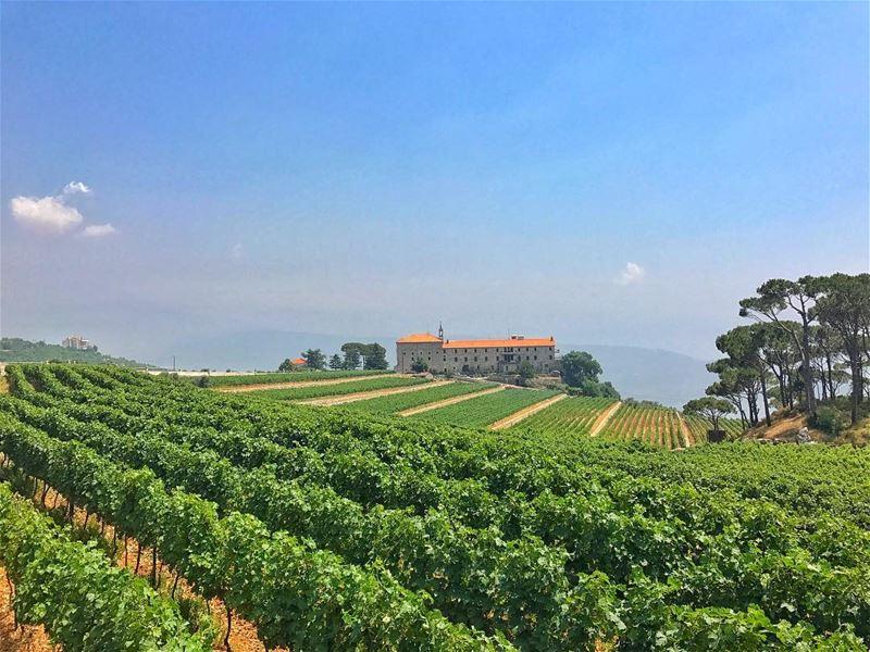 vineyard vines mountains convent 🍇@livelovebeirut @gopro @aroundthewo