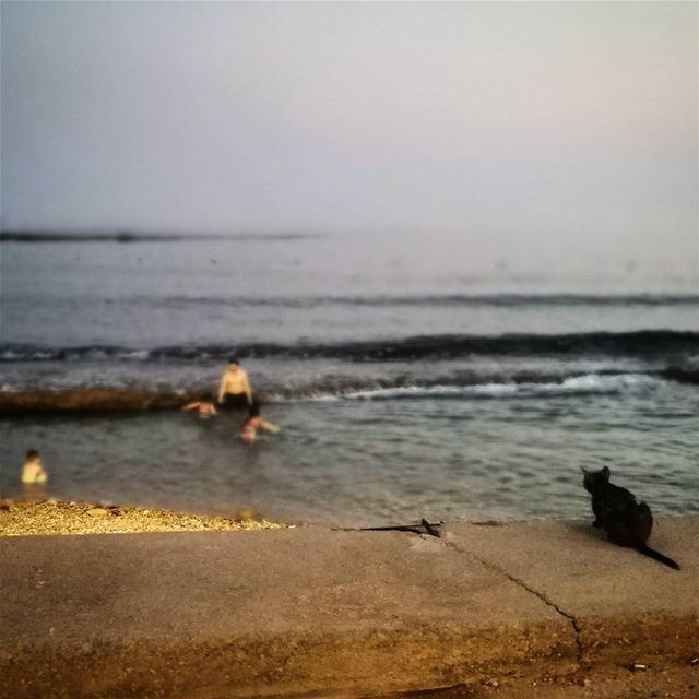 Cat lifeguard - ichalhoub in Batroun north Lebanon / lensonstreets ...