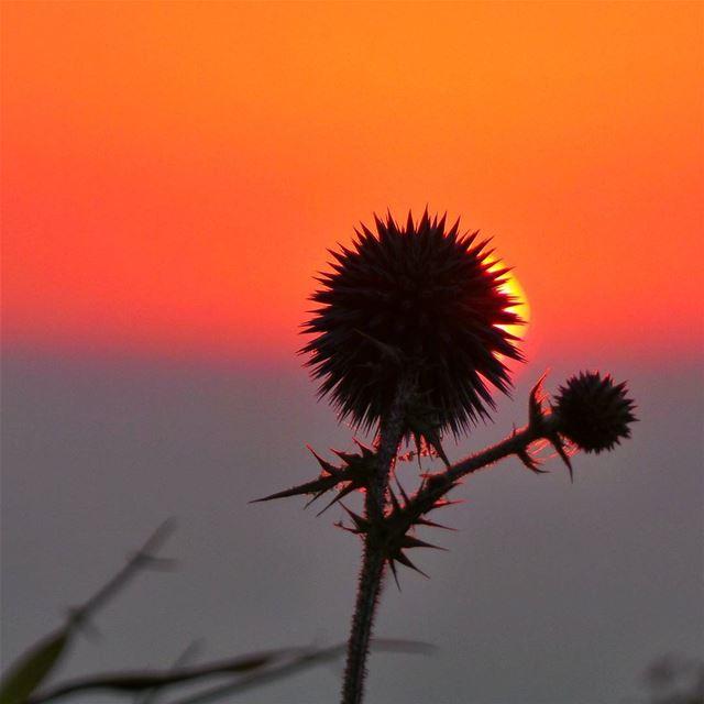 Enjoy every sunset ❤--------------------------------- nikontop_ ... (Baakline, Mont-Liban, Lebanon)