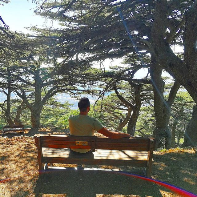 Let there be Sunshine in your soul today. ... (Al Shouf Cedar Nature Reserve)