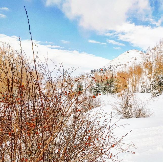 Do you guys miss winter ? ❄☃️ mycountrylebanon bestofleb Lebanon...