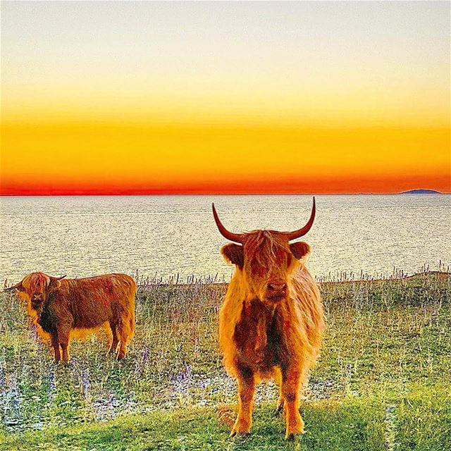 igsweden ig_lebanon öbilden rebel_scapes bns_sunset ... (Gillberga Natur- och Kulturbrott)