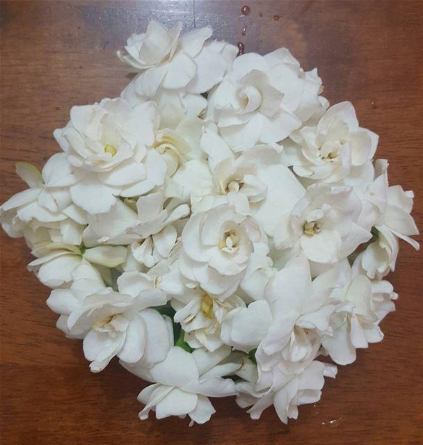 flowers white my garden nature naturelovers instaflowers instalovers...