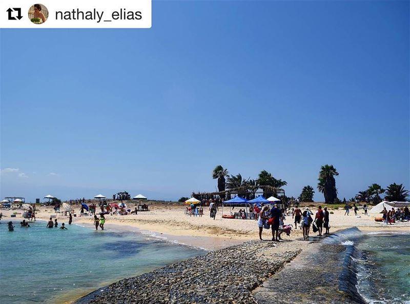 Livehasbayalove Repost @nathaly_elias ・・・Hello July ♥ Palmisland ... (Palm