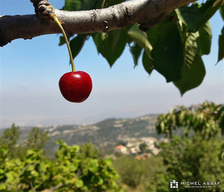 🍒 cherry livelovenature livelovelebanon northlebanon behwayta photography...
